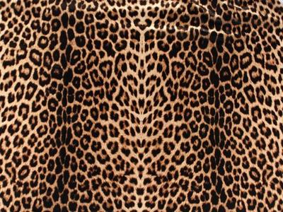 ANIMAL DOUBLE PRINT ON LYCRA