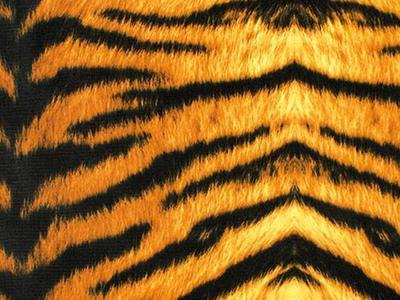TIGER PRINT ON LYCRA BROWN-BLACK